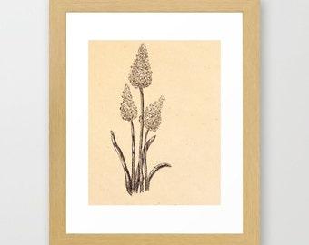 FRAMED painted - Crafting botanical illustration lavender