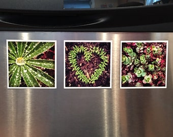 Green Sprout Photo Magnets (3-Pack)