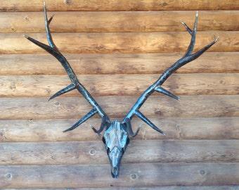 Life sized elk skull/antlers