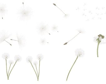 Hand painted dandelions, png  file overlays, summer overlays, real dandelion overlays, dandelion seeds, instant download, plants