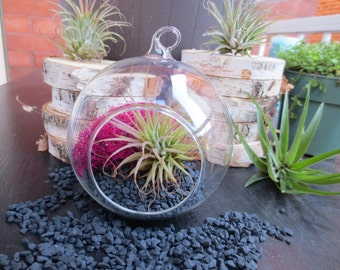 Brimstone Air Plant Terrarium/Hanging Glass Air Plant Terrarium/Tillandsia DIY Kit