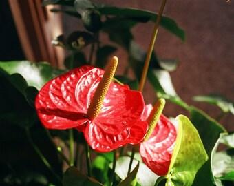 Flower 8x10 print 35mm