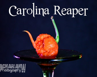Carolina Reaper (15+ Seeds)