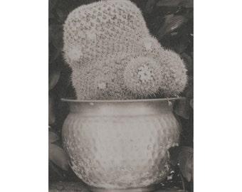 Snow cactus