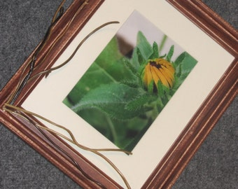Black-eyed Susan with Branches