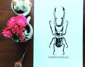 Limited edition Cyclommatus Metallifer print