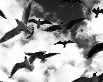 SEAGULLS #3 SW photography fine art from 10 x 10 cm Seagull Black and White Photography