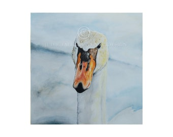 Fine Art Print of Swan Study in Watercolour