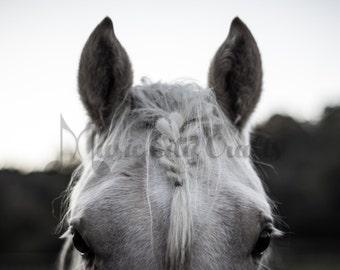 White Horse Picture | Horse Picture | Horse Photography | Horse Wall Art | Equine Photo | Equine Art | Animal Art | Rustic Wall Decor