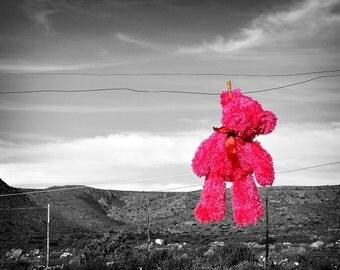 Pink Teddy Bear Hanging around