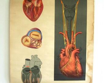 Human Heart Chart - Anatomy Art Chart - Human Biology Map - Medical school chart - Medicine Chart - Human Heart Poster