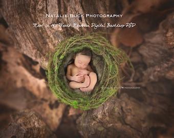 Nest in the Woods ~ Newborn Digital backdrop/ Background Digital File PSD