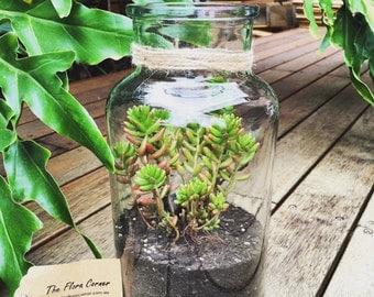 Vintage Style Succulents Terrarium