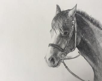 Pencil Pony