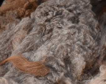 RAW Alpaca Wool Fiber Fleece  Prime 1st Gray/Brown ELL 12 oz