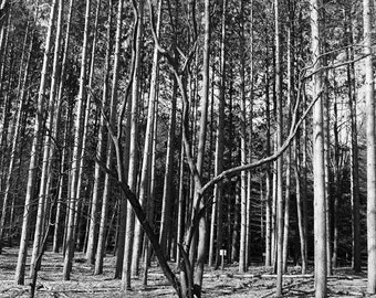 black and white photography. digital photography,digital download art,nature photography,outdoor photograph