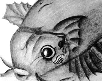 Lady Fish Pout