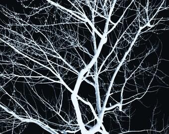 Inverted Tree(8x10)