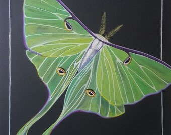Luna Moth Painting | Giclee Fine Art Print | Animal Painting | Animal Art | Nursery Art | Butterfly Art | Butterfly Painting