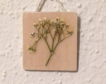 Pressed Baby's Breath on Wood 3