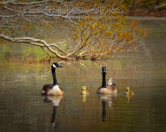 Sanctuary - Peaceful, Calm, Nature