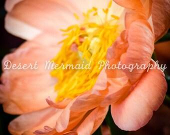 Flower Seven
