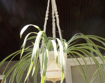Mid-spiral plant holder