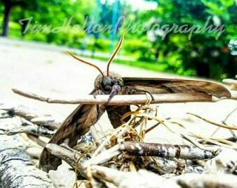 Moth Love