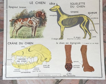 ROSSIGNOL MDI Vintage French School Poster biology Two Sides 1960s 19 dog