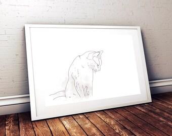 Leyla cat Burmese //Leyla the Burmese cat
