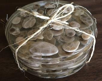 Petoskey Stone Coasters- Set of 4