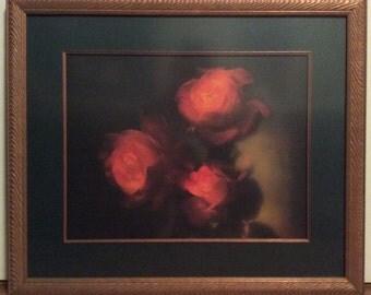 Peaceful Garden Roses