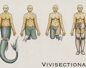 Vivisectionary
