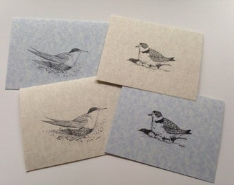 Shorebird Note Cards, Piping Plovers, Least Terns, Endangered Birds, Bird Greeting Cards, Beach Birds, Nesting Birds, Set of 4