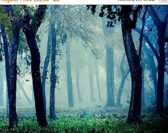 Summer Sale - Fairytale - Foggy Woodland Photo - Magical Photography - Blue Mystical Forest - Decorative Print