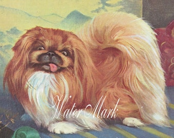 Dog*Dogs*Peke*Darling irresistible Pekingese  dog in color*Adorable *Quilt art fabric block*Quilts,Pillows,Sachets,Frame