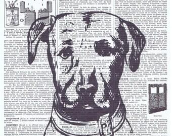 Dog.Canine.antique book page print.vintage illustration.paris.french.gift.child.nursery.home deco.art.pet.mans best friend.pretty picture