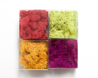 2 oz Reindeer Moss Colored // Terrarium Element