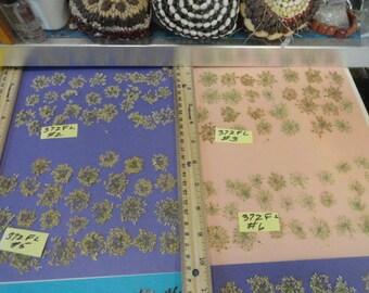 Choose your  Real Pressed Flowers, Wild Celery, Snowflake Flowers Grown in Alaska 372 FL