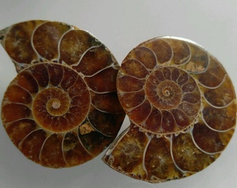 2 polished AMMONITE halves from Madagascar - for jewelry-making, collecting fossils - #518-A