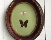 Vintage Oval Gesso Frame - Butterfly Art
