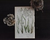 Botanical Print, Woodland Plants, 19th Century Chromolithograph Colored Plates, Meadow Grasses, Vintage Lithographs
