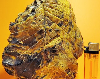 big leaf fossil imprint on Sumatran Amber