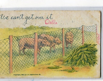 Pigs  antique postcard, undivided, We can't get over it, Pigs vintage postcard