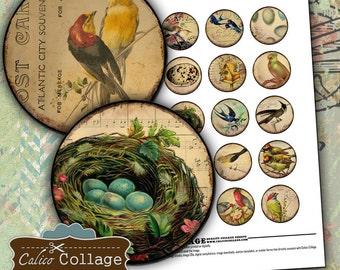 1.5 Inch Circles Vintage Birds Digital Collage Sheet Printable Sheet Images for Pendants Magnets Vintage Bird Postage Calico Collage