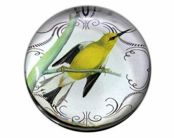 Beautiful Yellow Bird Glass Paperweight