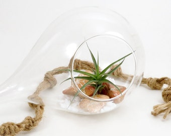 SALE! Air Plant In The Morning Dew Terrarium