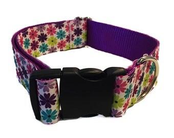 Daisy Wide Dog Collar, Martingale or Leash