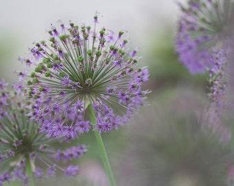 Purple Pompom Photo