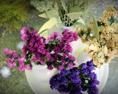 Ivory Statice-Pink statice-dried flowers-boutonniere flowers-small bundles in your choice of color